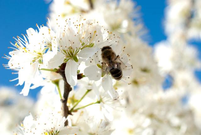 Einen Bienengarten anlegen
