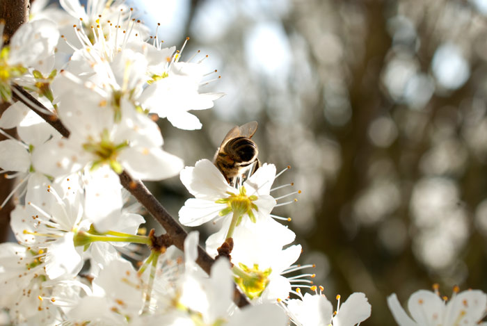 Bienengarten anlegen: Mit 3 Faustregeln zu mehr Blüten und Bienen 5