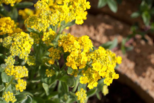 Bienengarten anlegen: Mit 3 Faustregeln zu mehr Blüten und Bienen 10