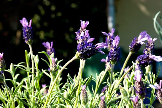 Bienengarten anlegen: Mit 3 Faustregeln zu mehr Blüten und Bienen 8